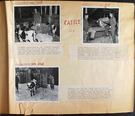 Cattle - Negatives No. 310 to 312
