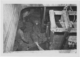 Sheep in the hold of the SS Lindenwood Victory prepare to leave the ship by means of flying stalls
