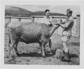 UNRRA has immunized more than 200,000 head of cattle in China with vaccine imported from the United States and Canada, and is working with Chinese agricultural leaders to establish vaccine-producing laboratories in China