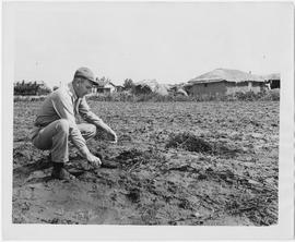 Dean Eckhoff, UNRRA pesticides advisor, digs into Chinese farmland to investigate whether locusts...