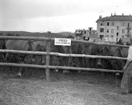 [Yugoslavia] Aldamcich Janko, Director of Prestrenek Livestock Assembly Station, expressed his gr...