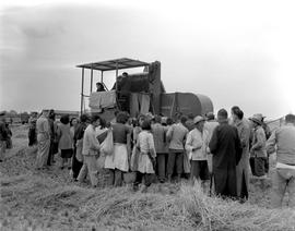 CNRRA / 759 Chinese farmers and their families are absorbed in admiration as a 12-foot self-propelling Massey-Harris farm combine picks rice near Minghong, near Shanghai, at 300 times the speed of a human being