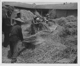 ER Henson, left, UNRRA agricultural rehabilitation officer in Washington, watches Chinese farmers...