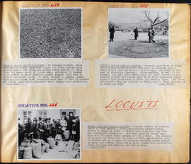 Locusts - Negatives No. 454 to 456