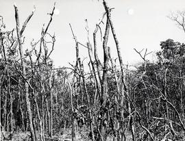 Damaged trees in early part of wreckage path.