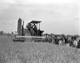 CNRRA / 762 Chinese farmers and their families are absorbed in admiration as a 12-foot self-propelling Massey-Harris farm combine picks rice near Minghong, near Shanghai, at 300 times the speed of a human being